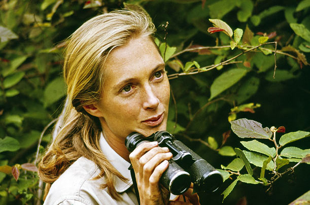 jane goodall was born in london in 1937 jane had a passion for africa ... Chimpanzee Jane